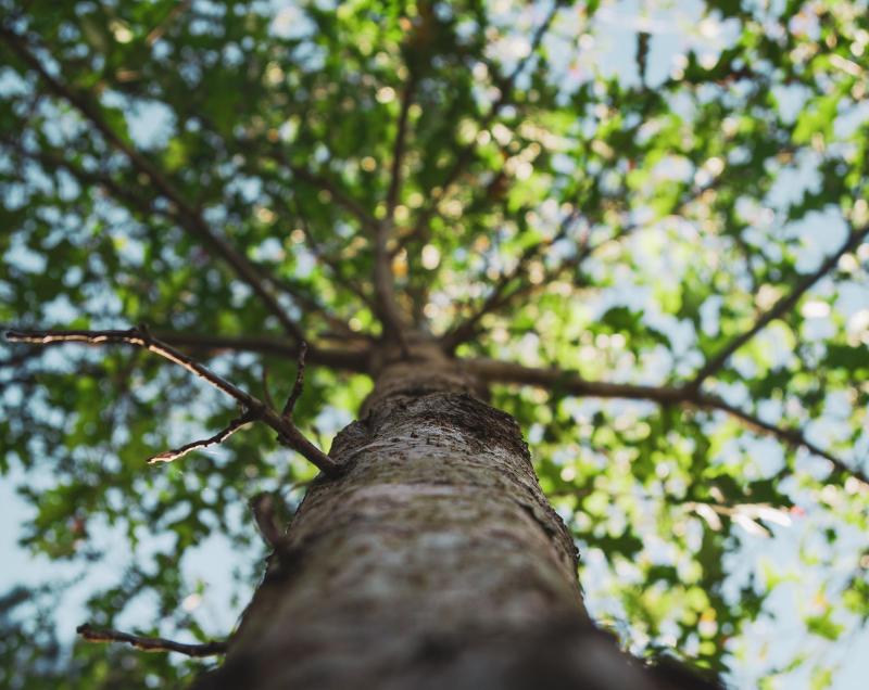 arbre mouvaux
